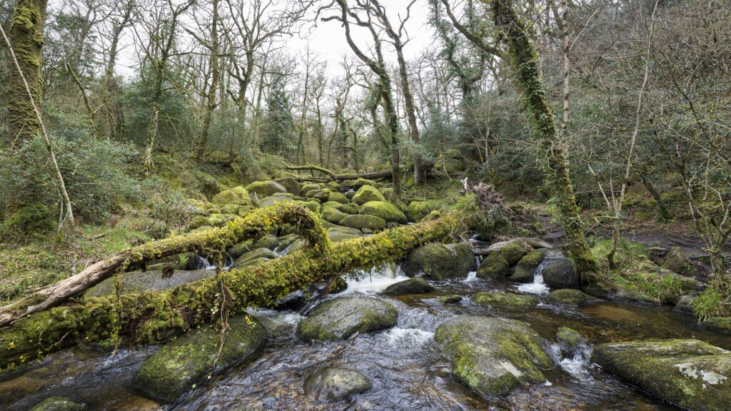 Image of Waterfall and mossy rocks at Becky Falls Devon