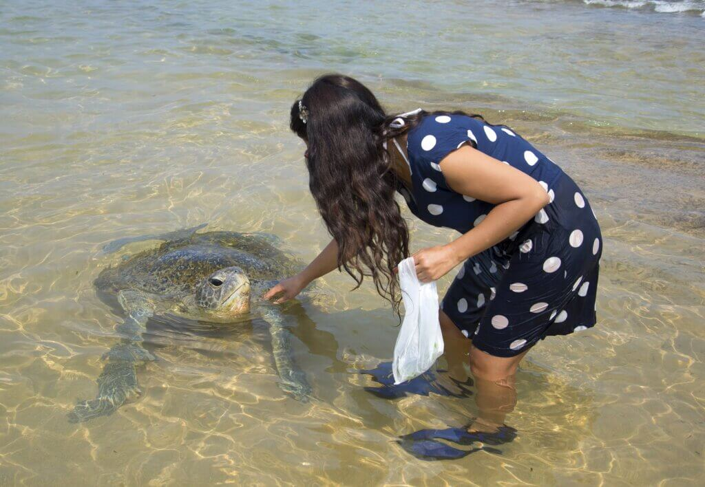 Image of Girl touching a sea turtle on the ocean shallows