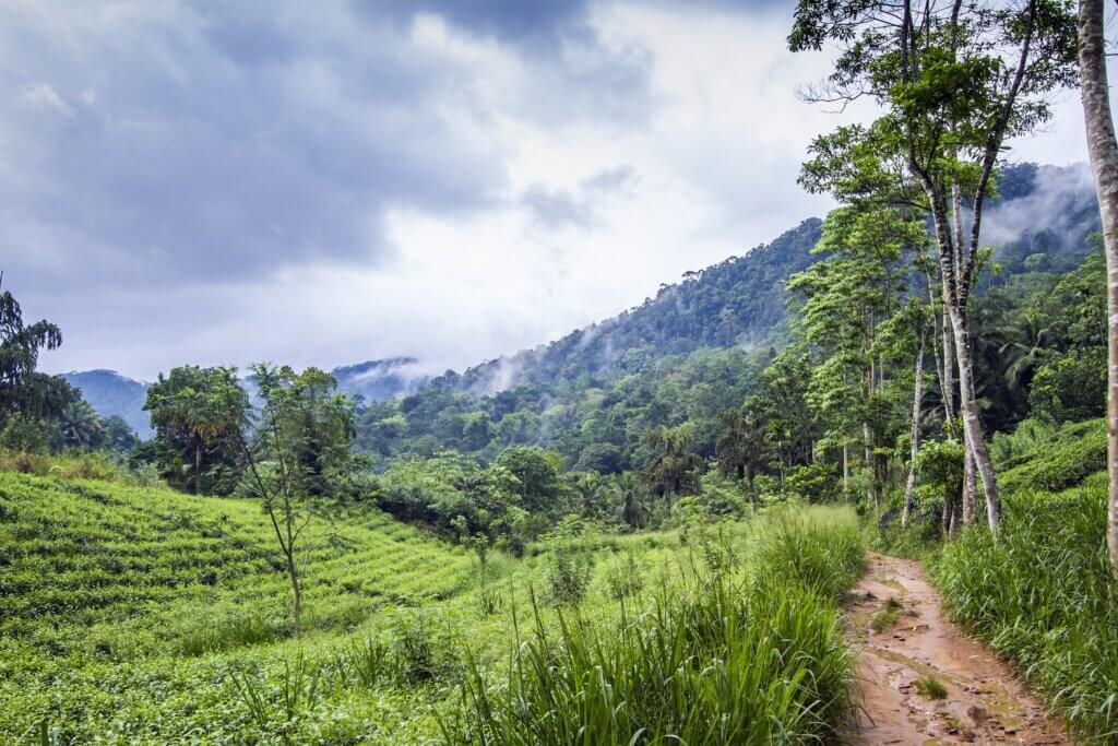 Image of Sinharaja rain forest nature reserve
