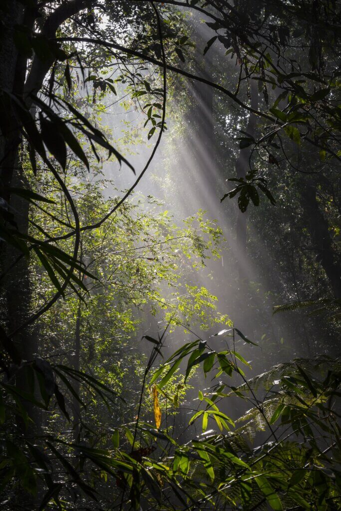 Image of Sunlight rainforest at Sinharaja Forest Reserve