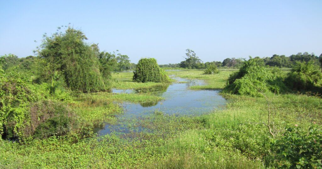 Image of Swamp in Lahugala National Park