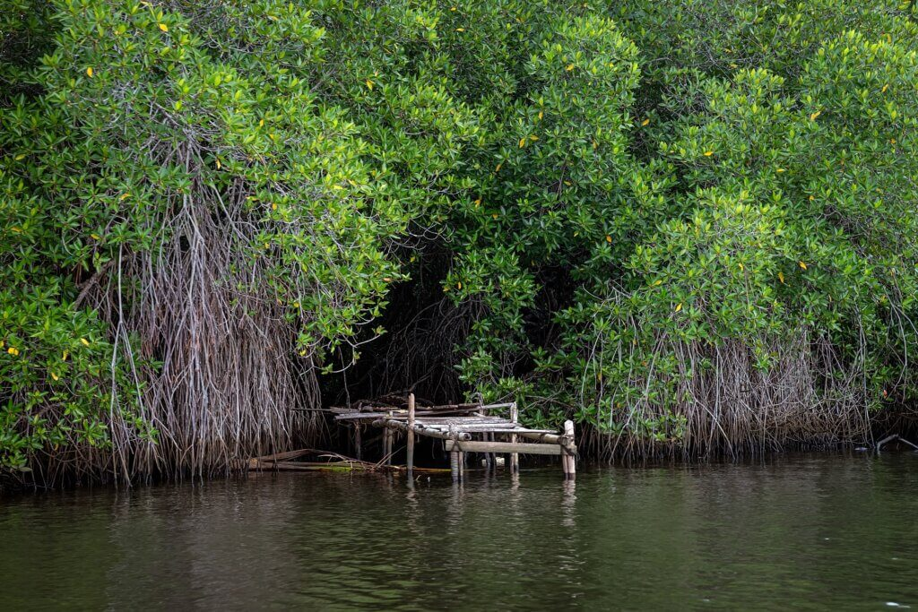 Image of The river among the Jungle