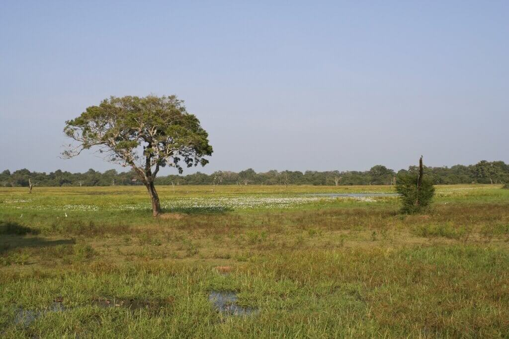 Image of View of wasgomuwa national park