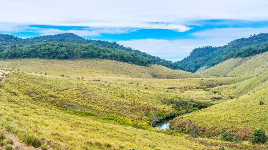 Image of nature in Horton Plains