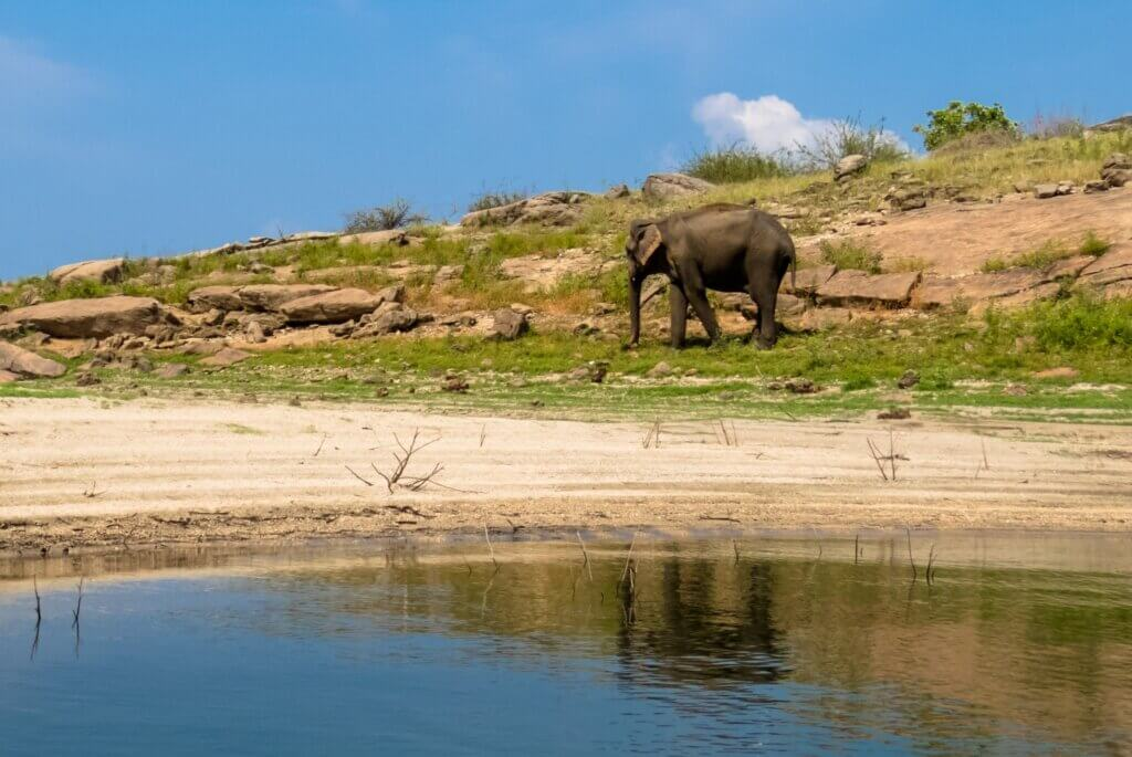Image of Beautiful Island lake standing asian elephant in gal oya national park