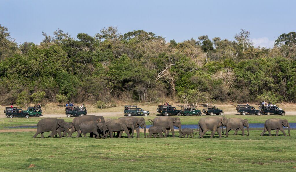 Image of elephants heading for a drink in Minneriya National sri lanka