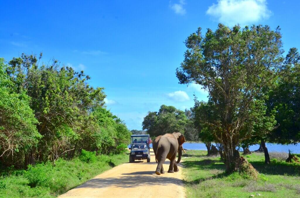 Image of Jeep of tourist encounters an elephant at the Yala Park