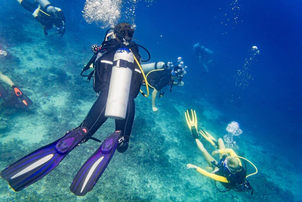Image of Divers scuba diving looking at sea turtle and fish under wate