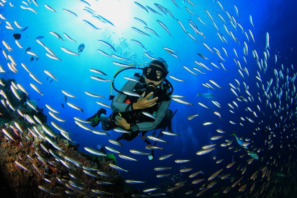 Image of Scuba diving with fish on coral reef