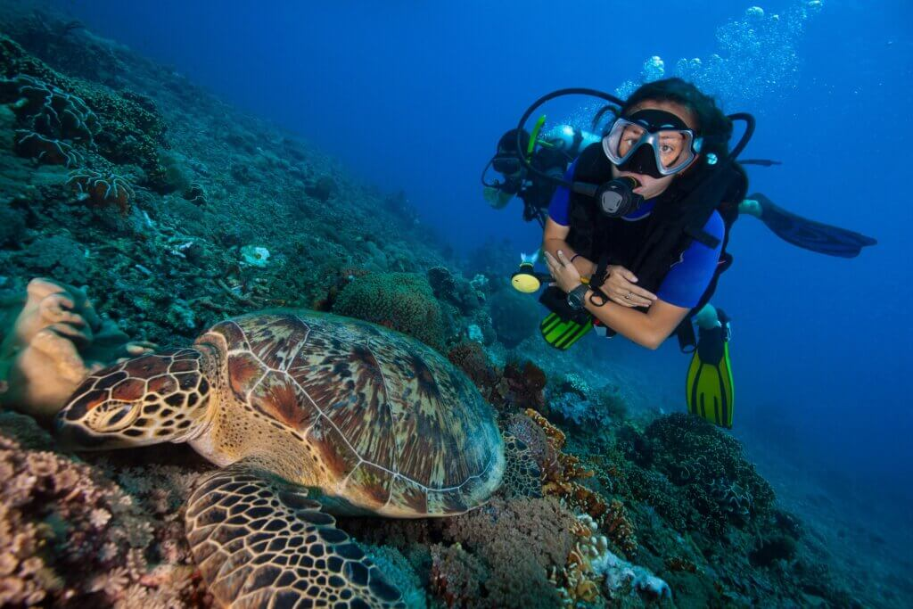 Image of Big green sea turtle and scuba divers in bright blue clear water