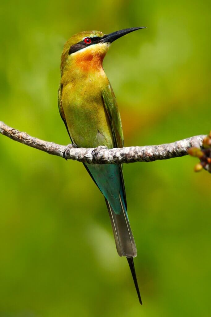 Image of Beautiful bird in the nature tree branch habitat