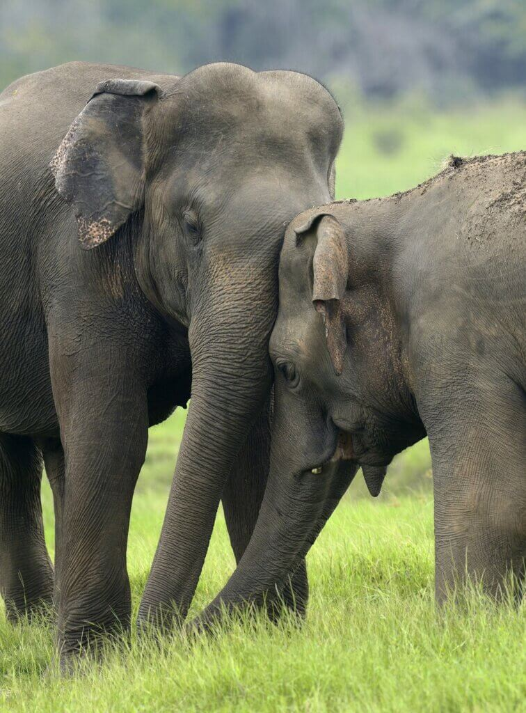Image of Elephants in National Park