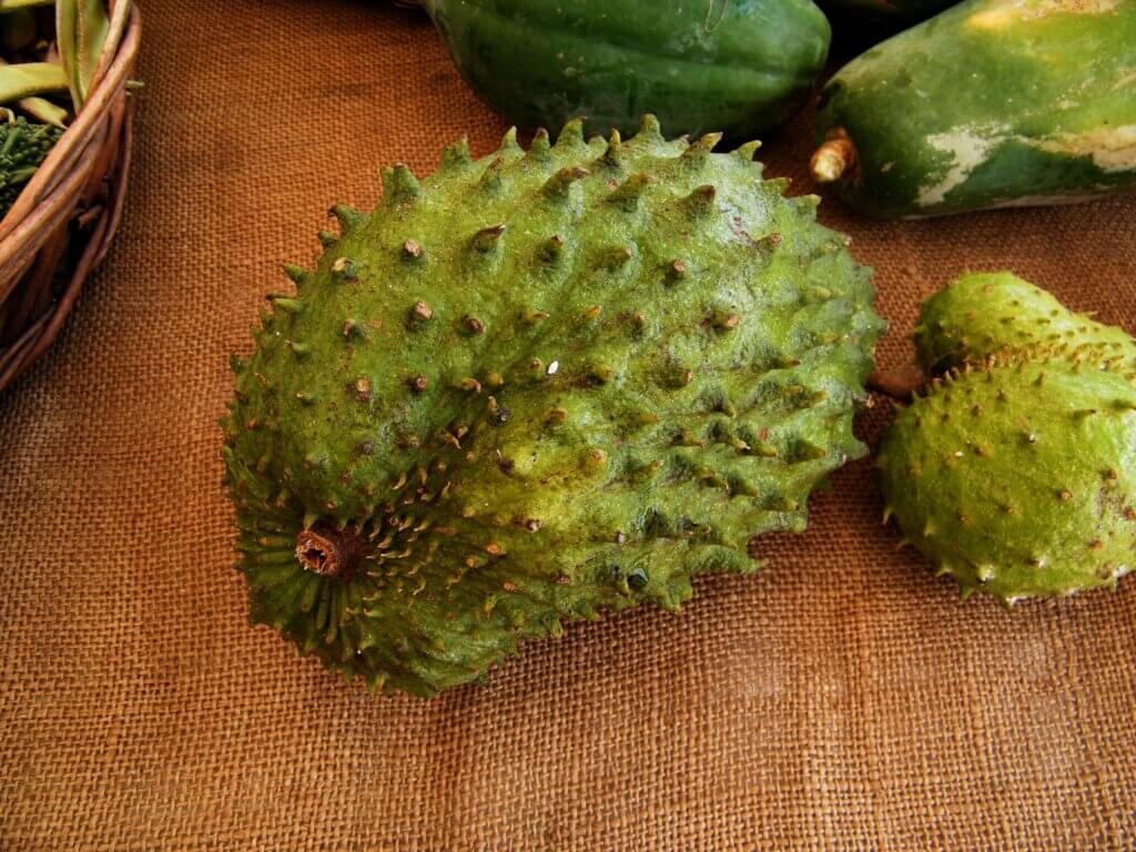 Image of Soursop is the fruit of Annona muricata