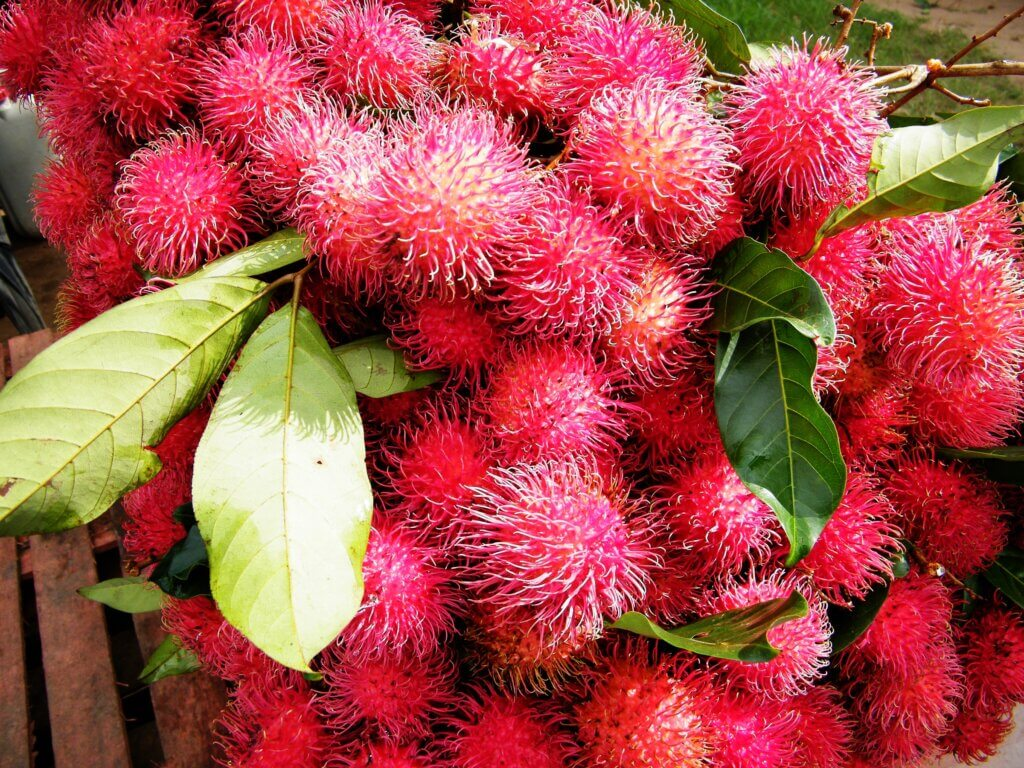 Image of Rambutan is a medium-sized tropical tree in the family Sapindaceae