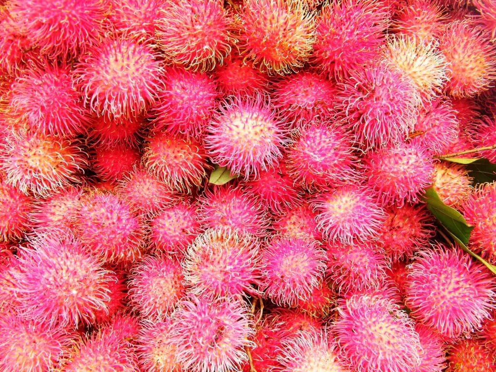 Image of Rambutan is a tropical tree in the family Sapindaceae