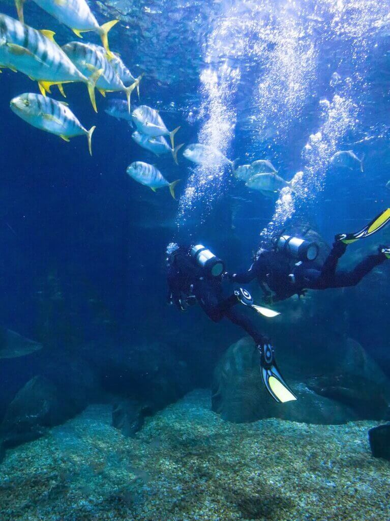 Image of Divers exploring fish underwater in the sea